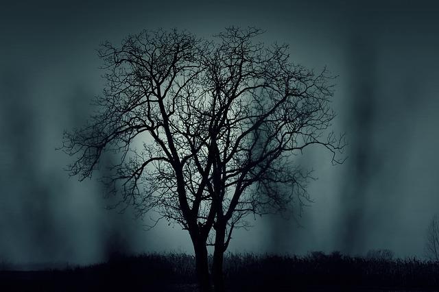 tree-407256_640